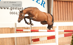 Freejumping Geyer 2014_92 by CalyHoney