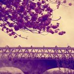 116 Railway Bridge by DistortedSmile