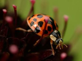 Ladybird 2 by AngiWallace