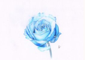 Blue Rose by xClarXCheex