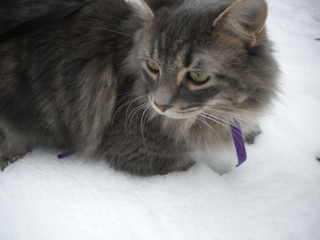 Marley in the Snow 2 by RachelMissy