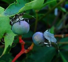 Stink Bugs August 17 2010 1 by seto2112