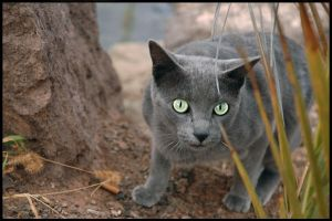 green-eyed by waoff