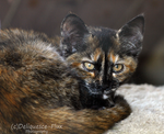 East Valley Animal Shelter 6 by Deliquesce-Flux