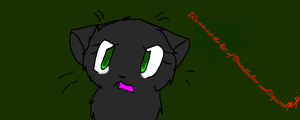 Hollyleaf 2 by SapphireMoonfeather1