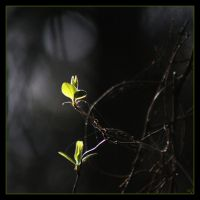 New  Life by Globaludodesign