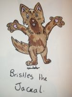 Bristles the Coyote by L-A-B-R-A-D-O-R