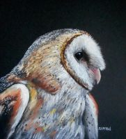 Barn Owl by Eddyfying