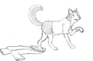 Request: Husky by Stormpaw