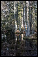 Forest water 2 by smeghead1976