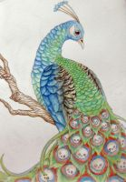 Peacock by BenjiiBen