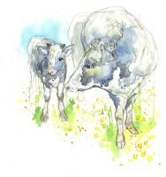 Dairy Cows VIII Calf and Mum by amwah
