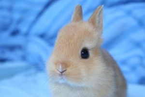 Orange baby rabbit by rowanrocks