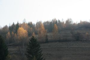 Birches in fire by nellunellu