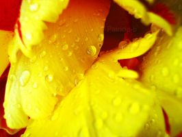 Yellow Spring by Patricia-b