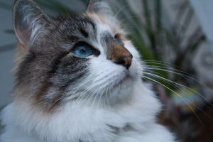 My cat by repdog