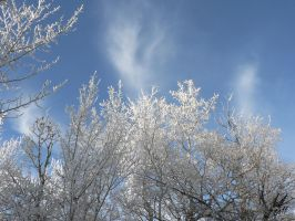 Hoar Frost 13 by Sybaristail