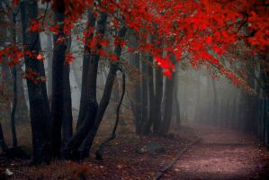 Fall Mystery by ildiko-neer