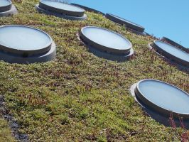 Living Roof by Shikahr24