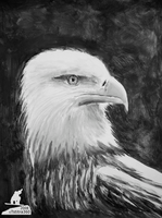Bald Eagle by Tsitra360