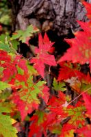 Fall Contrast by kaytealine