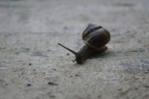 Little snail 9 by Panopticon-Stock