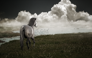 The Calmth Before The Storm by AnneWillems