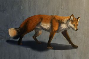 A red fox :D by ProgressivePit