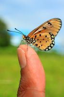 Butterfly on my thumb by karman87