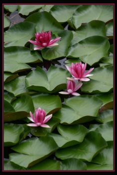 Lily's in Kyoto by cwfineart