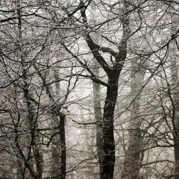 white frost by augenweide