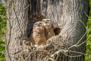 Owlets See Their First Airplane by kalika31