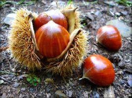 Chestnuts by Layit