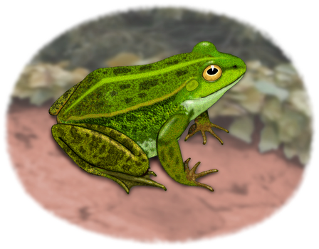 The Frog - Native Of The Riparian Zone by MisterBug