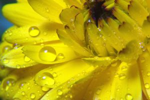 Fresh Wet Yellow by compman67