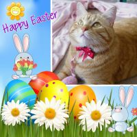 Happy Easter by lucytherescuedcat