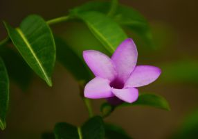 Costa Rica Flower by luckyseven11779