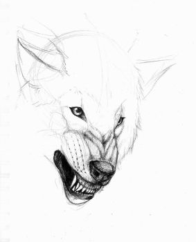 Wolf Sketch .03 by Mew-Suika