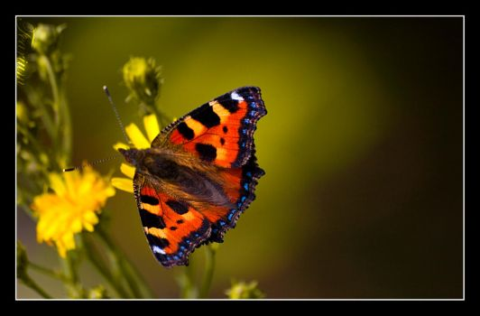 Butterfly oh yes by Fearium