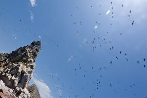 Tower of Birds by Dilznacka