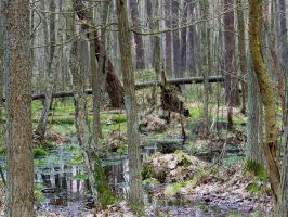 Swamps XXI by Vrolok-stock