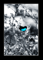 Like a butterfly on the wind.. by brytts-gotno-wytts