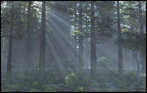 Deep Forest by jbjdesigns