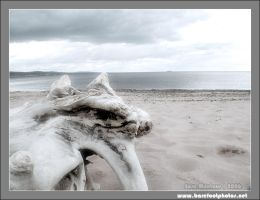Driftwood on Park Point by b4refo0tmu5ic