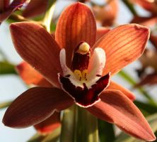 Orchid Show Feb2011 2 by panda69680102