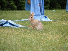 Rabbit 06 by DKD-Stock