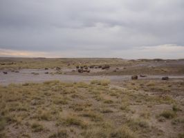 Trips to Petrified Forest NP 23 by Sting-raptor