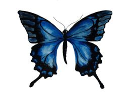 blue butterfly by dovespirit