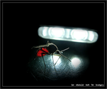 mosquito shouldn't be hungry by xtomay