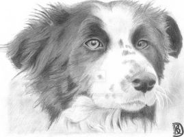 Tom the Collie by DanBoldy